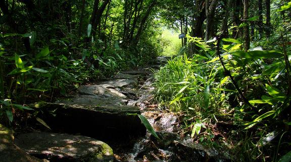 杨滩桐花社区风景图片
